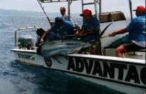 St lucia deep sea fishing charters sa st lucia for Deep sea fishing st lucia